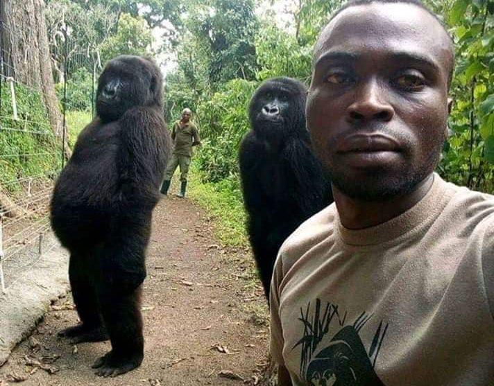 Gorilla Selfie in Democratic Republic of Congo