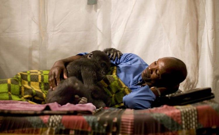 Gorilla Caretaker at Virunga National Park