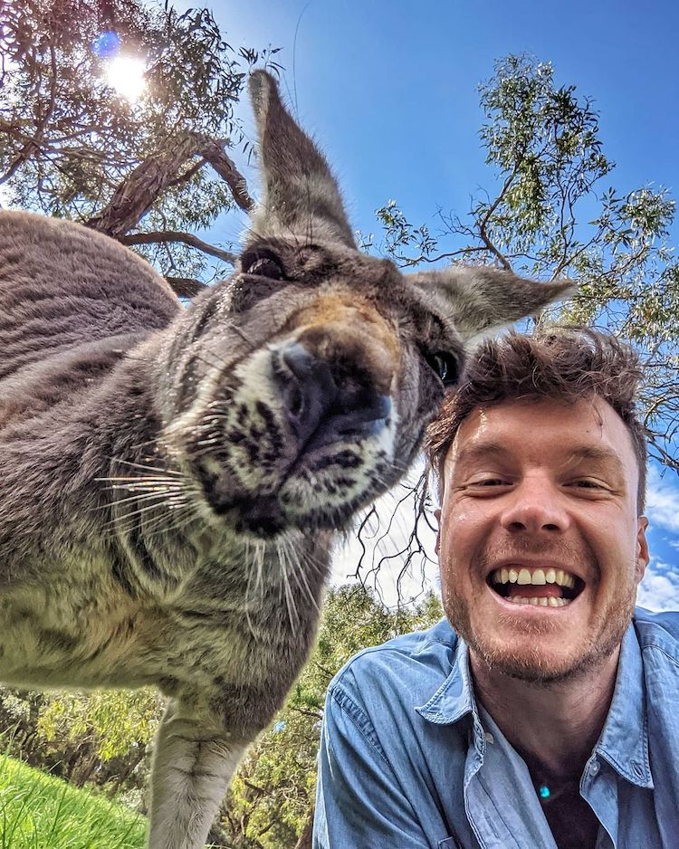 Allan Dixon Animal Selfie with Kangaroo