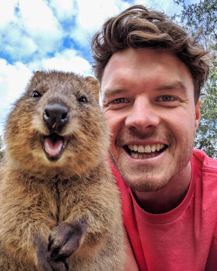 Allan Dixon Animal Selfie With Quokka