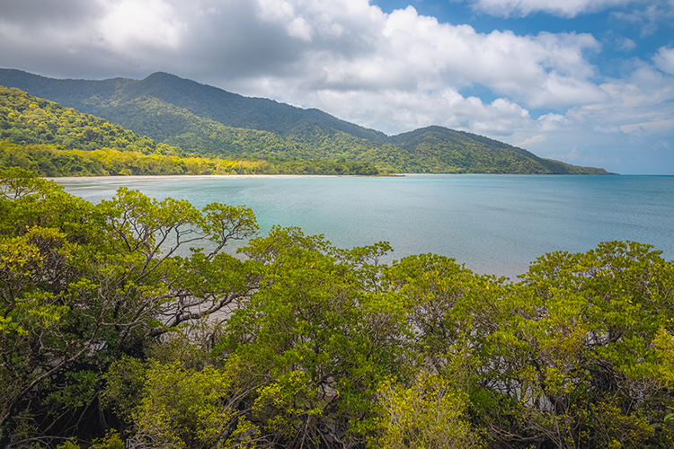 Ownership of World's Oldest Daintree Rainforest Is Returned to Its Aboriginal Inhabitants