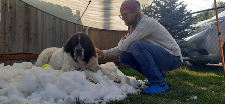 Dying Dog Plays in Snow For the Last Time