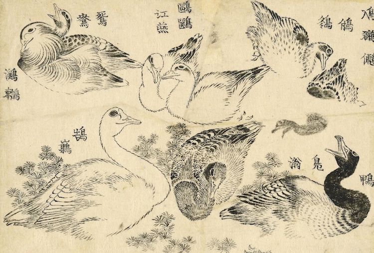 The Picture Book of Everything by Hokusai