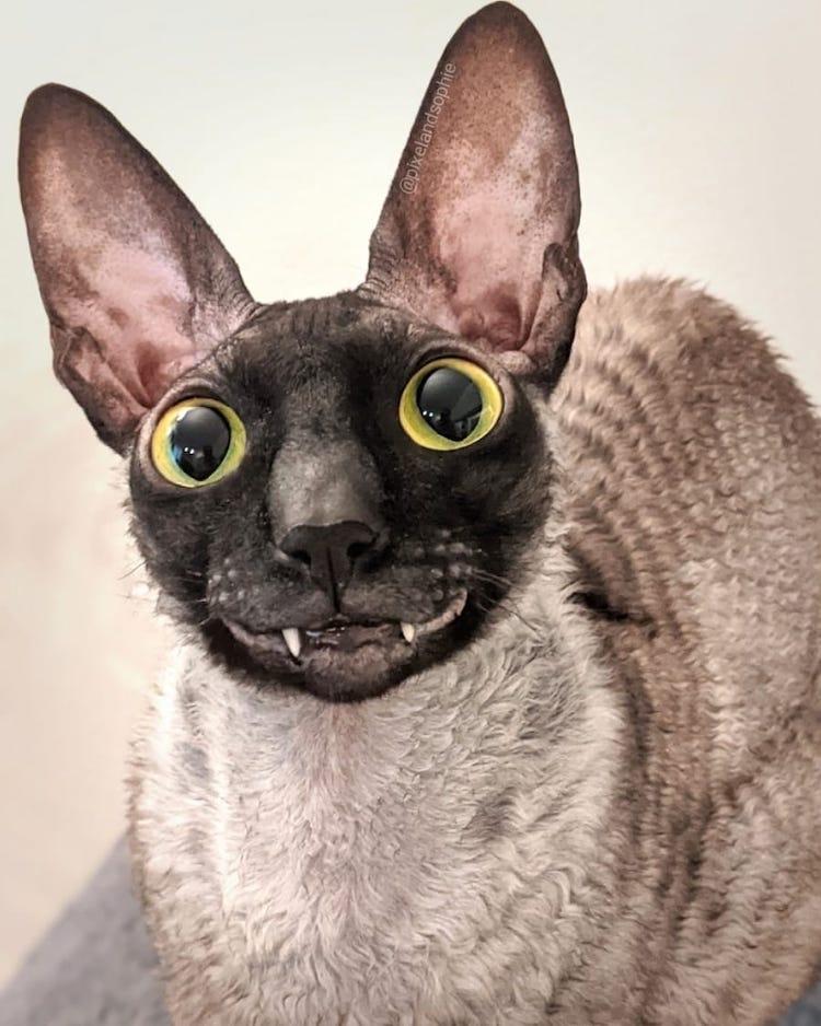 Pixel the Smiling Cat