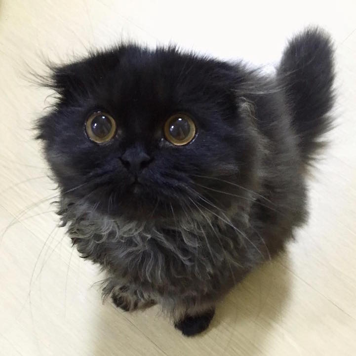 Adorable Cat Has The Big Hypnotizing Eyes Of A Wise Owl