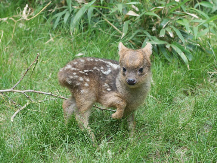 Adorable 1-Pound Fawn is the Newest Member of the World's