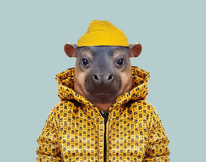 yago partal baby animal portraits animals dressed like humans hippo