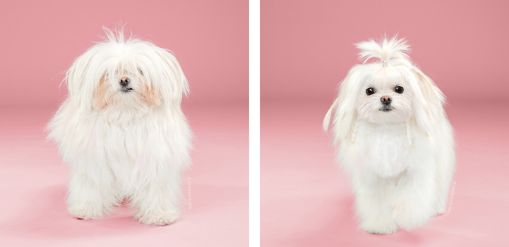 Dog Grooming Pictures Before And After