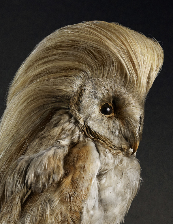 funny portraits of birds with luscious heads of hair