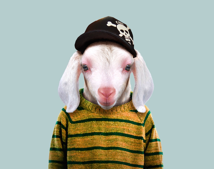 yago partal baby animal portraits animals dressed like humans goat