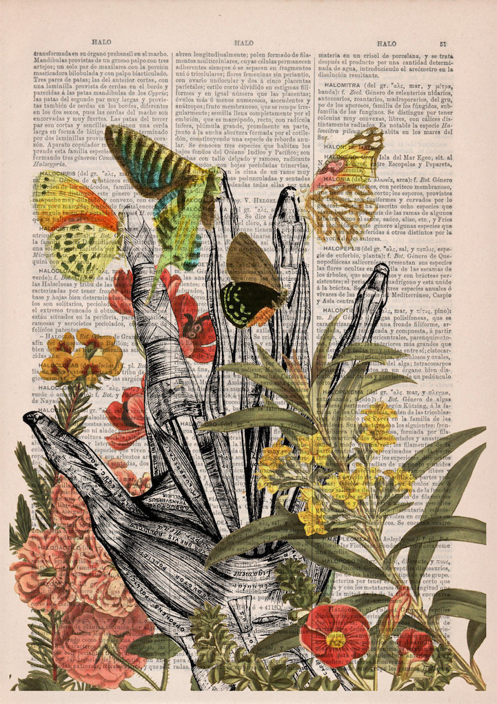 picture regarding Printable Vintage Dictionary Pages titled Interesting Floral Anatomy Examples Deliver Contemporary Everyday living in the direction of