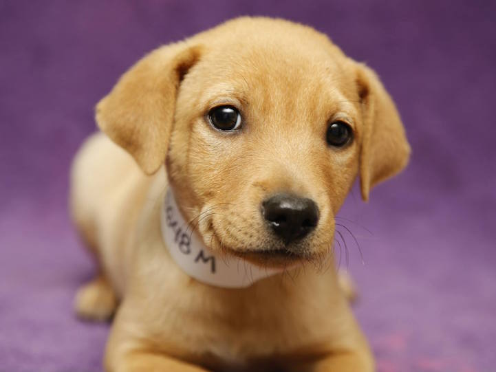 Phoenix, Arizona Made It Mandatory for Pet Stores to Only Sell