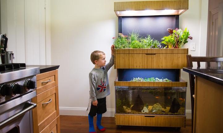 Hi Tech Indoor Garden Uses Aquaponics To Grow A Salad A Day