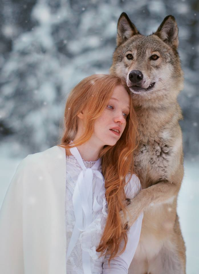 Wolf Like Dogs With Blue Eyes