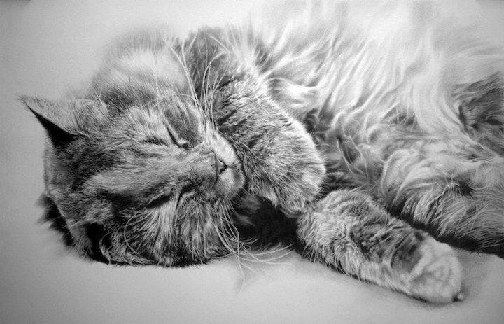 Mind Blowing Photorealistic Pencil Drawings Of Cats