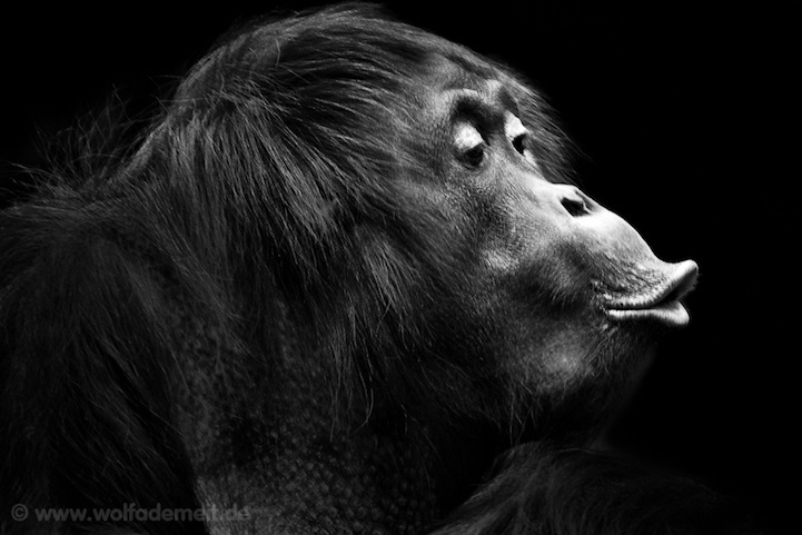 Expressive black and white portraits of zoo animals
