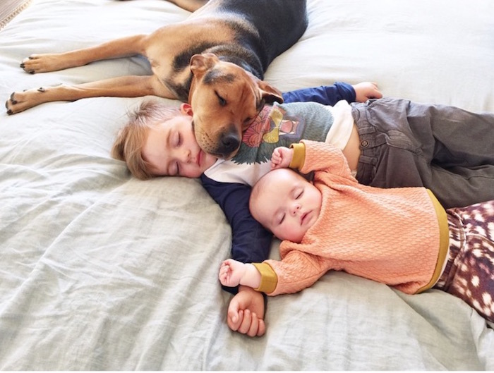 Adorable Baby Sister Joins Famous Toddler And Puppy For Daily Naps - Toddler naps with puppy