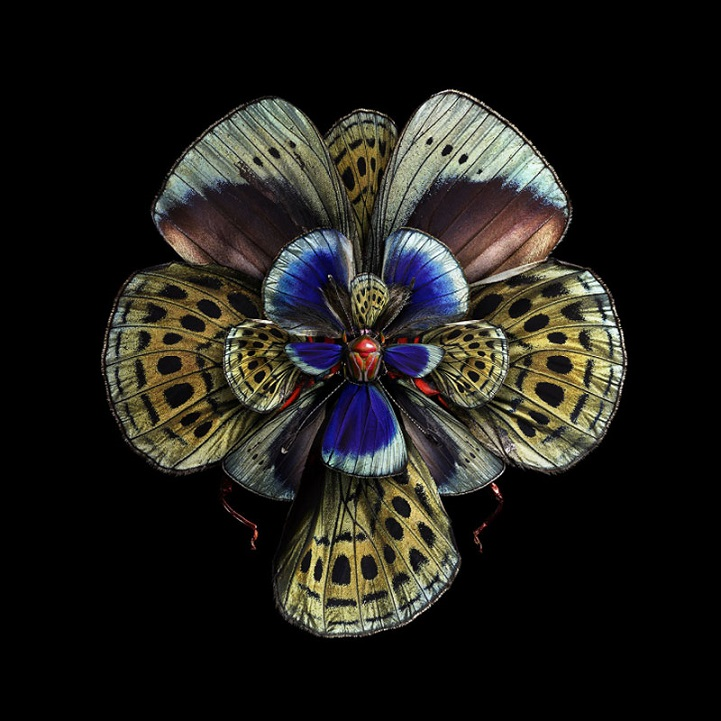 insect wings made to look like blooming flowers explores