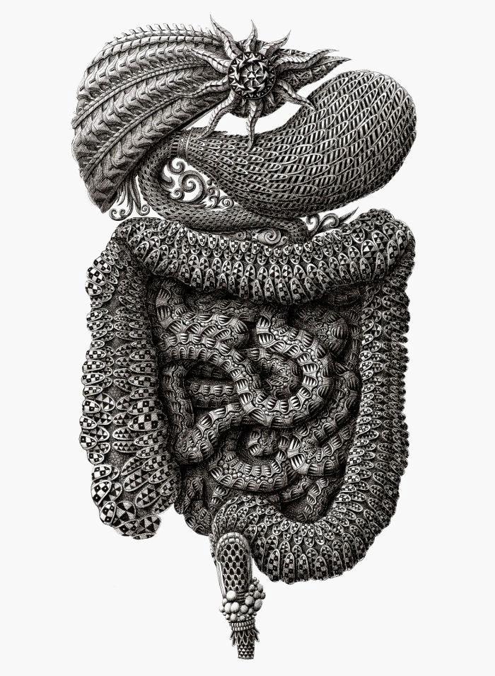 Meticulously Detailed Drawings Of Surreal Human Anatomy My Modern Met
