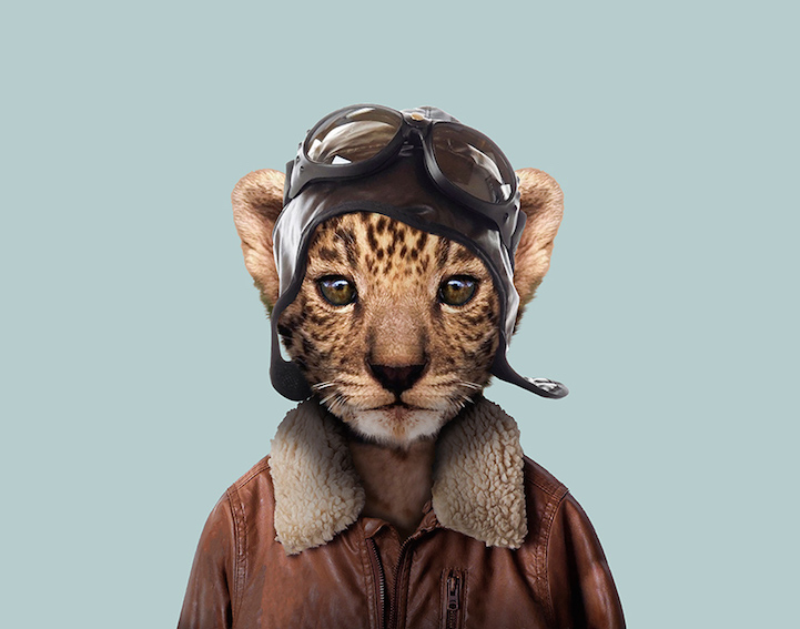 yago partal baby animal portraits animals dressed like humans leopard