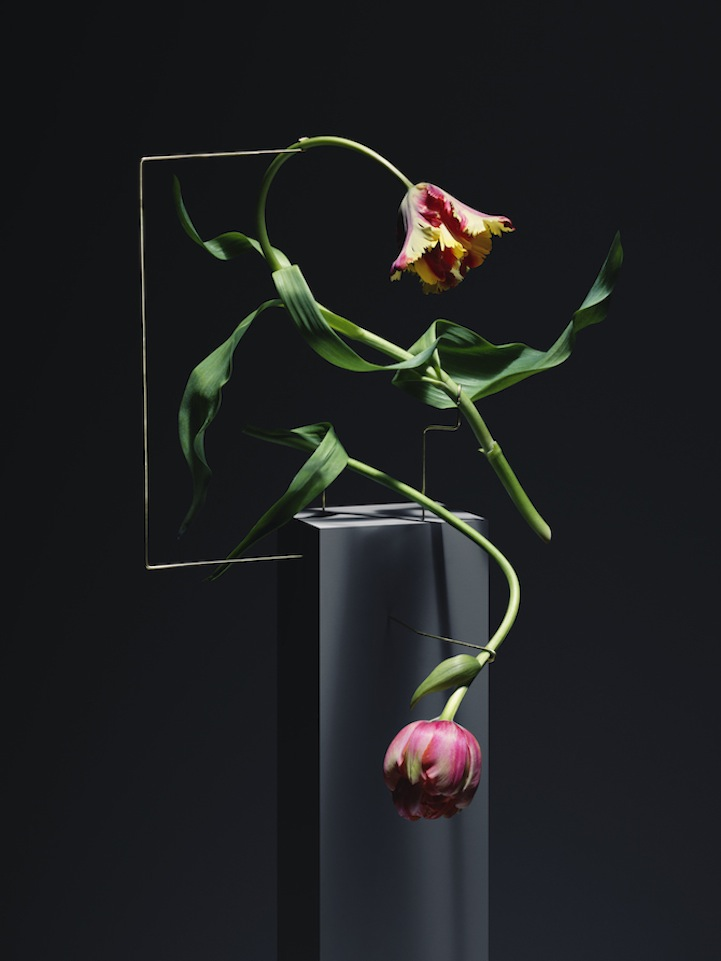 Elegant Flowers Sculpted Into Unexpected Minimalist ...