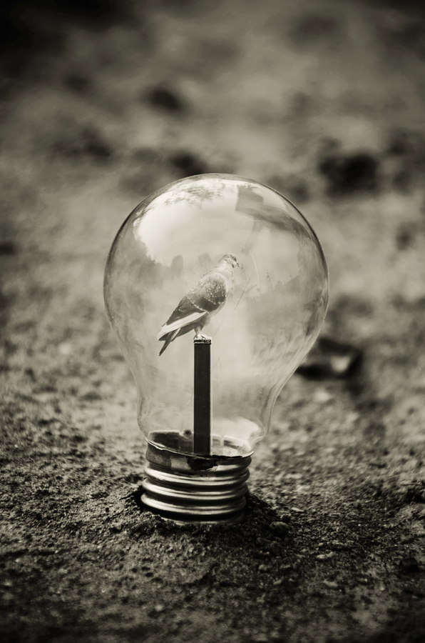 Surreal Artifacts Of Life Encased In Magical Light Bulbs