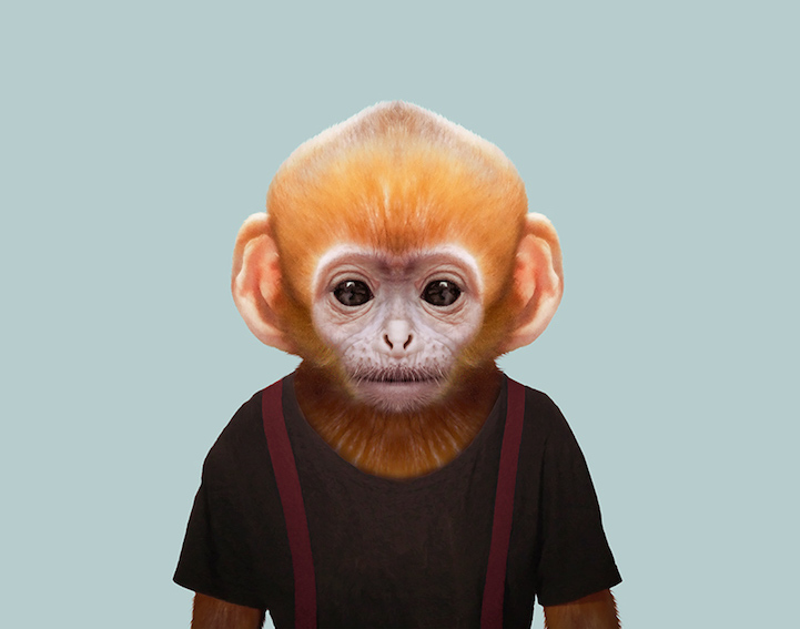 baby animal portraits present young animals dressed like