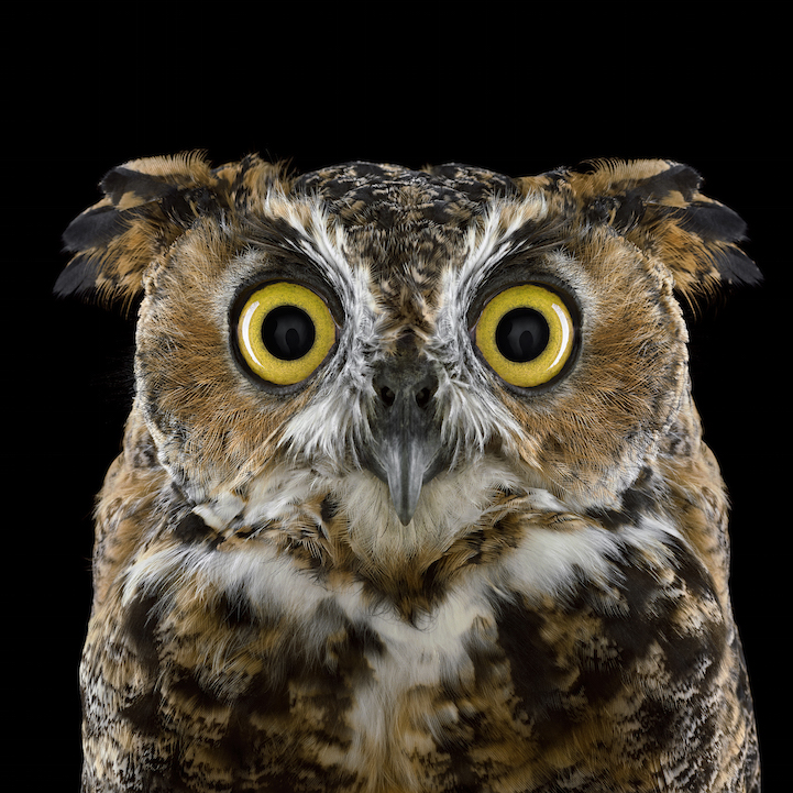 stunning portraits of owls captured in up close detail - Picture Of Owl