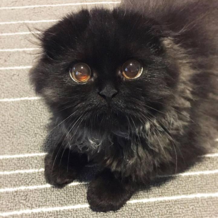 Korean Face Cat Eyes