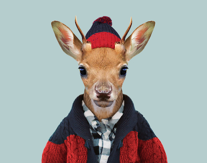 yago partal baby animal portraits animals dressed like humans deer