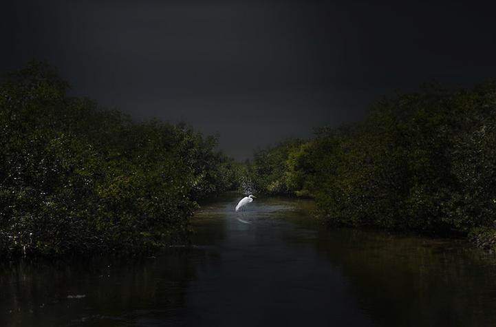 Winners of the International Fine Art Photography