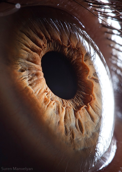 how to take macro shotsof the eye