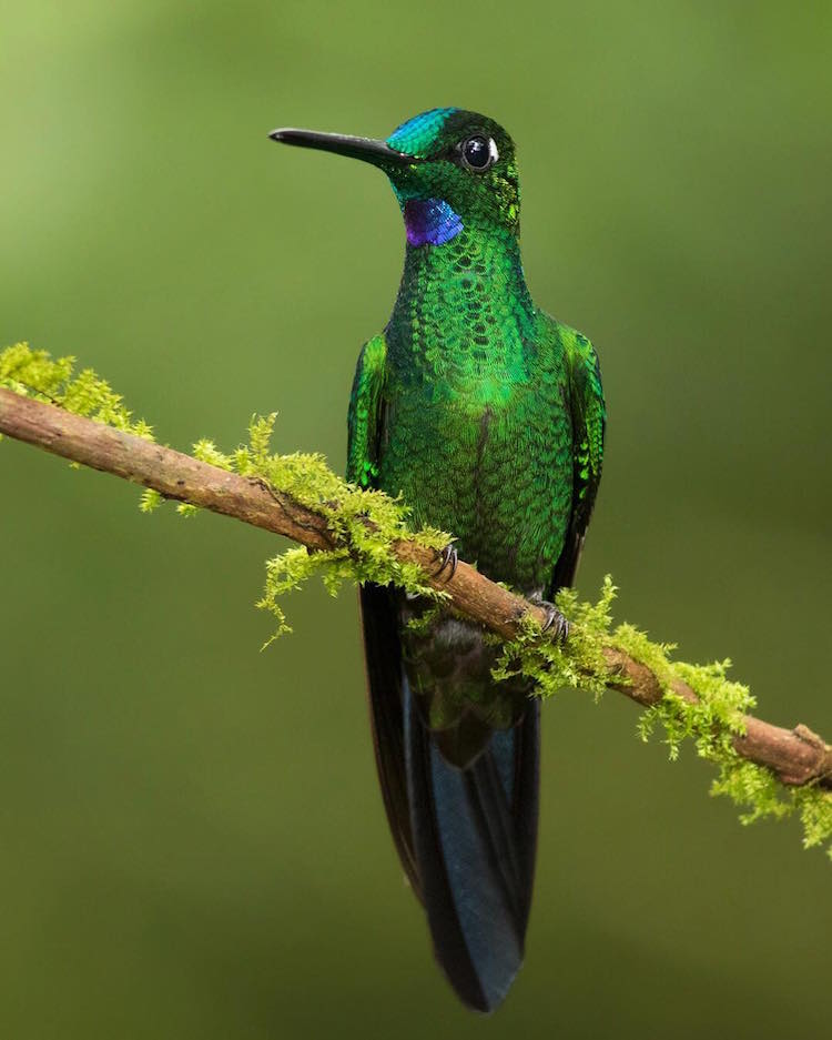 Lustrous Green Bodied Bird