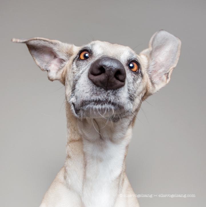 Incredibly Expressive Dog Portraits by Elke Vogelsang