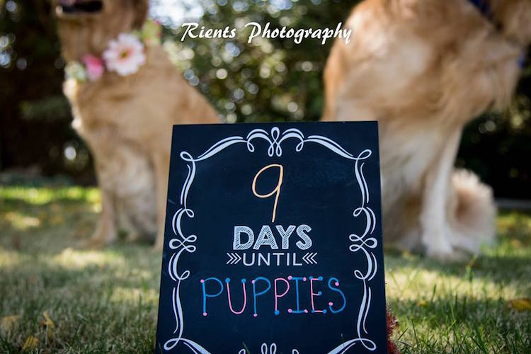 Photoshoot For Expecting Dogs