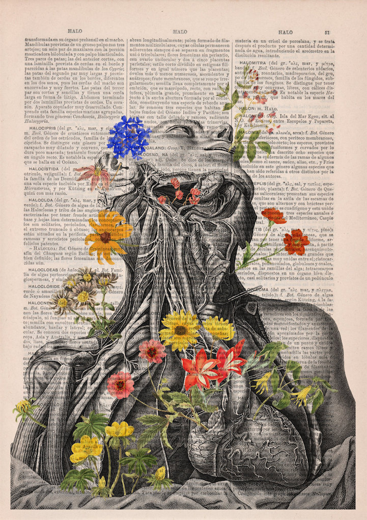 Beautiful Floral Anatomy Illustrations Give New Life to