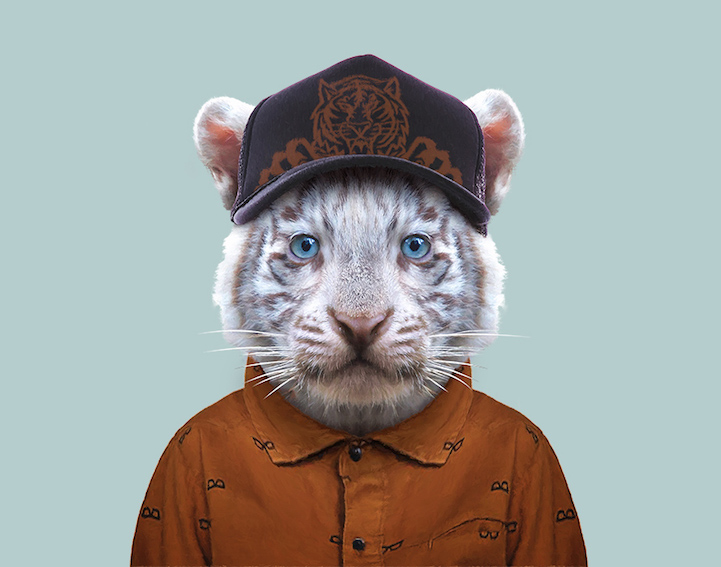 yago partal baby animal portraits animals dressed like humans tiger
