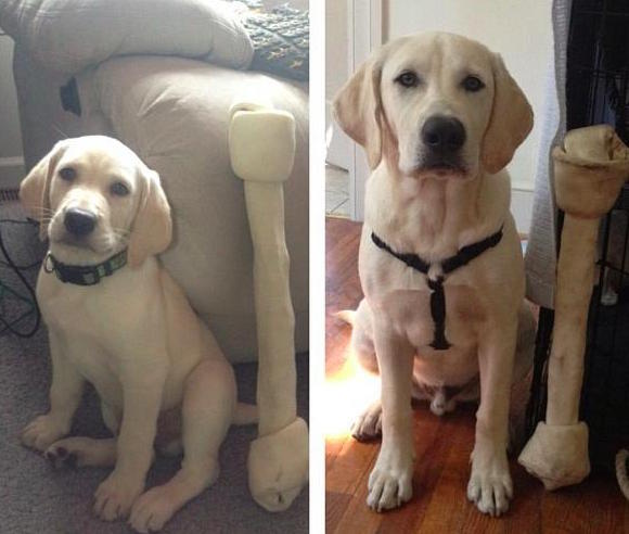 21 Before And After Photos Of Adorable Puppies Who Become Beloved Dogs
