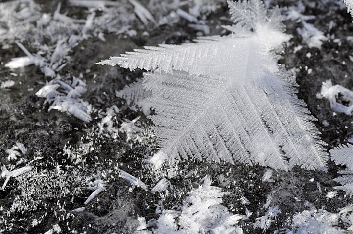 Frost Flowers Form An Ethereal Meadow Of Ice Crystals Around
