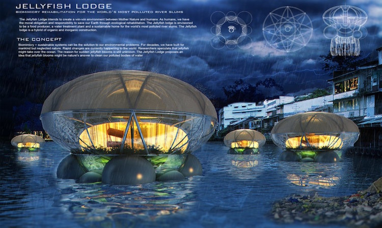 Jellyfish Lodge Brings Life To Unsafe Waterways