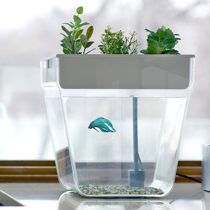 25 gift ideas for the creative people in your life for Water garden fish tank