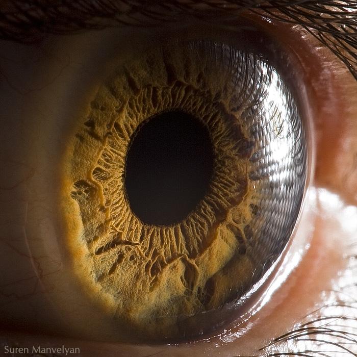 Amazingly Revealing Macro Photos Of The Human Eye