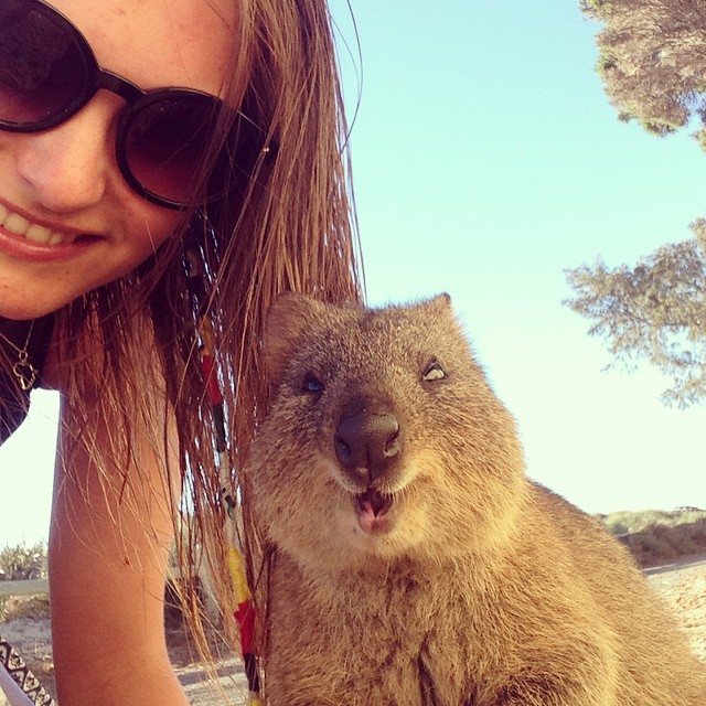 how to get a photo with a quokka
