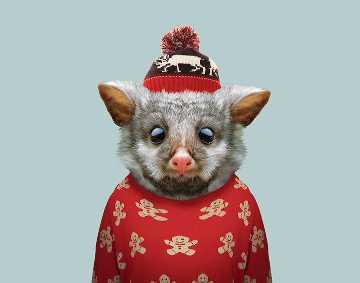 yago partal baby animal portraits animals dressed like humans possum