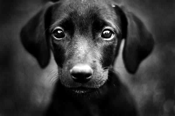 Most Inspiring Sad Black Adorable Dog - LNiDbidYYnzaPnyboqCB_1082021035  Trends_3658  .jpeg