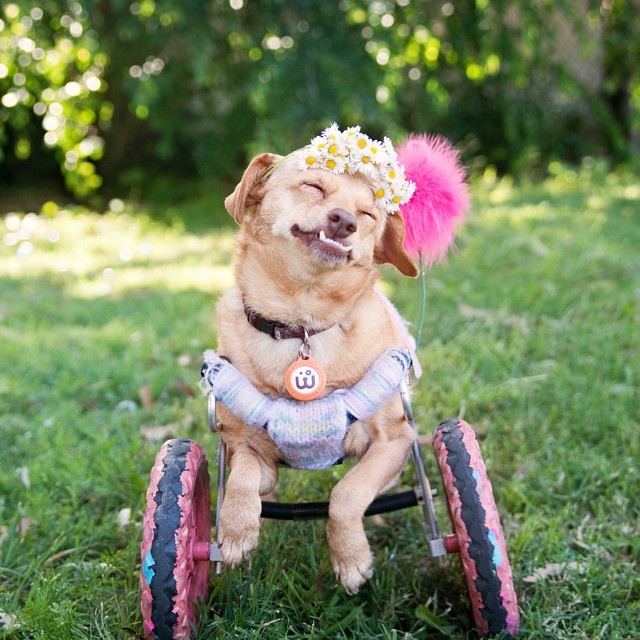 Special Needs Dogs For Adoption Uk