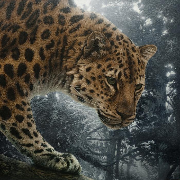 animal wild realistic scratchboard
