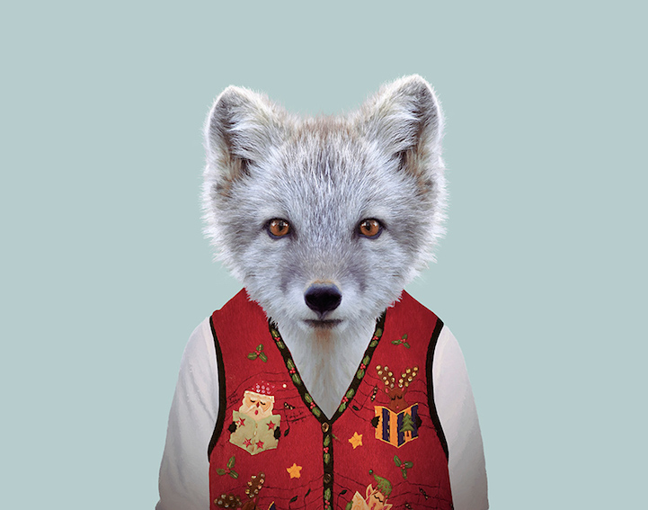 yago partal baby animal portraits animals dressed like humans fox