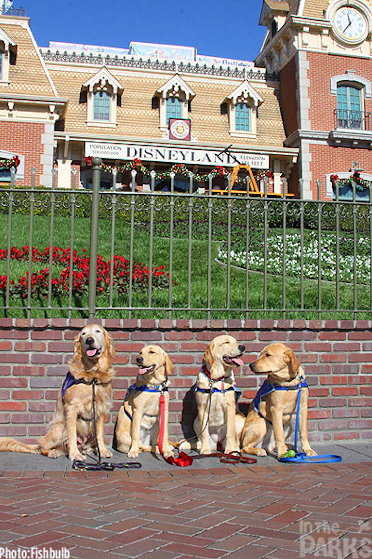 Support Dogs Day Trip To Disneyland