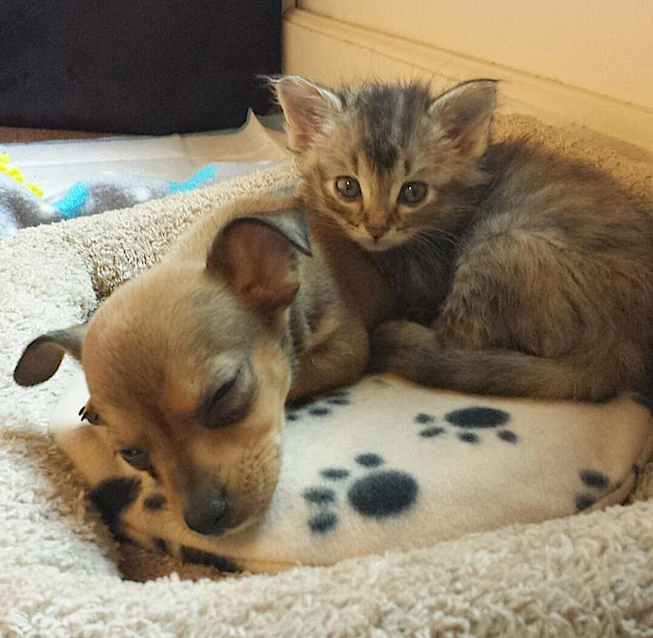 Abandoned Puppy And Stray Kitten Become The Most Adorable